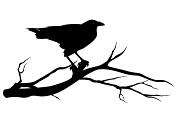 Raven Bird Silhouette
